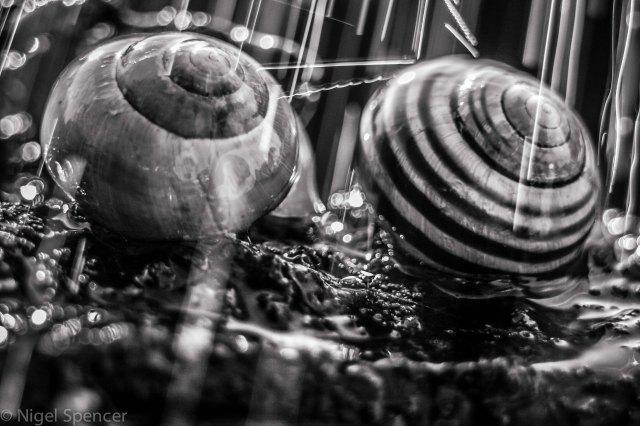 Raining snails B&W