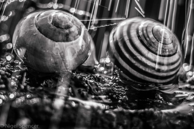 Raining snails B&W