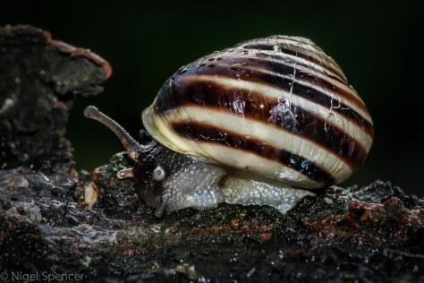 Lone Snail